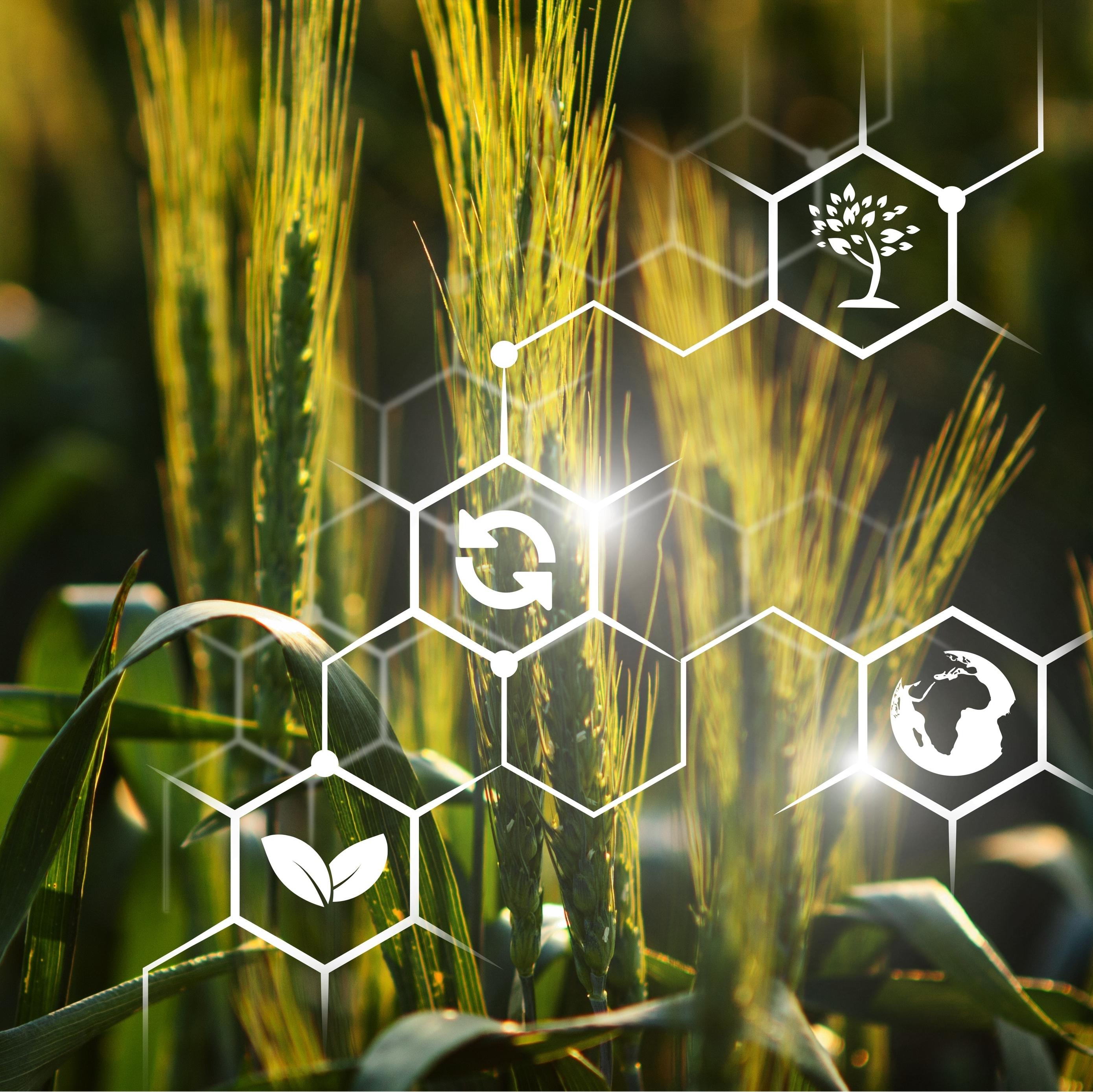 AgroTech: интеллектуальные технологии в сельском хозяйстве